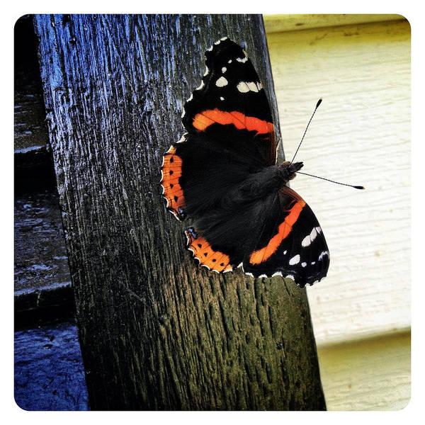 Catskills Photograph - Phoenician Butterfly by Natasha Marco