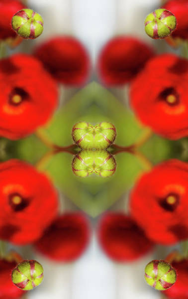 Red Ranunculus Art Print by Silvia Otte