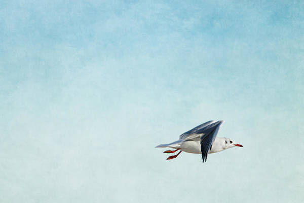 Seagulls Mixed Media - Seagull by Heike Hultsch