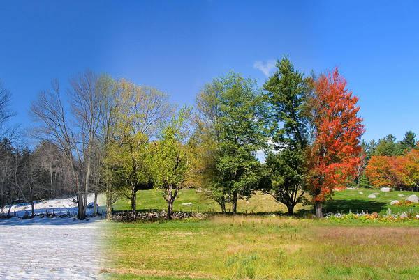 Photograph - 4 Season Trees In New Hampshire by Larry Landolfi