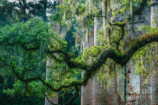Photograph - Old Sheldon Church - The Deep South by Dale Powell