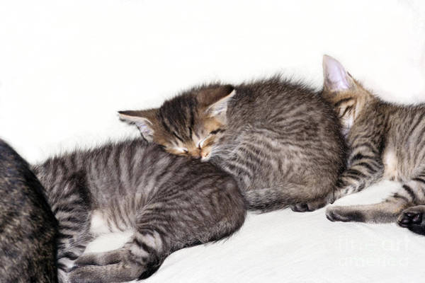 Wall Art - Photograph - Sleeping Kitten by Michal Boubin