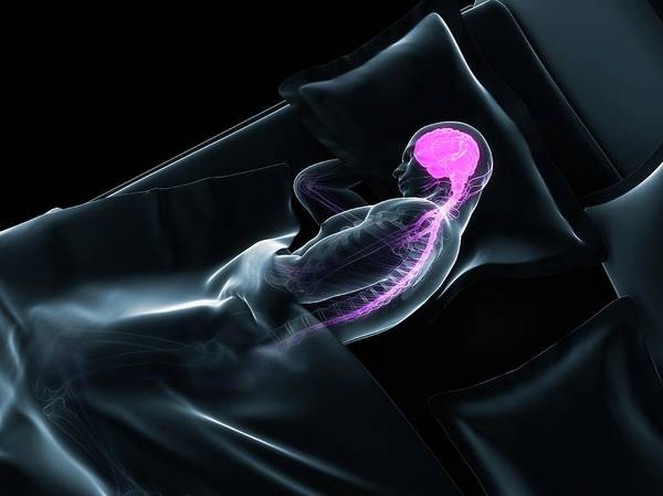 Nervous System Photograph - Sleeping Man by Sciepro/science Photo Library