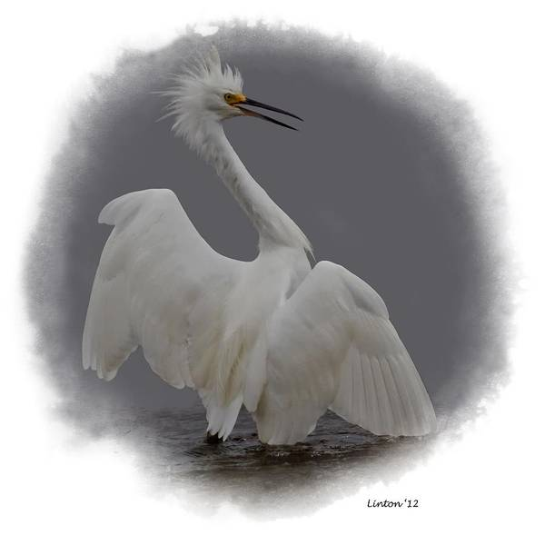 Photograph - Snowy Egret  by Larry Linton