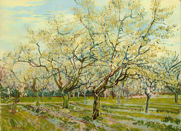 Painting - The White Orchard by Vincent Van Gogh