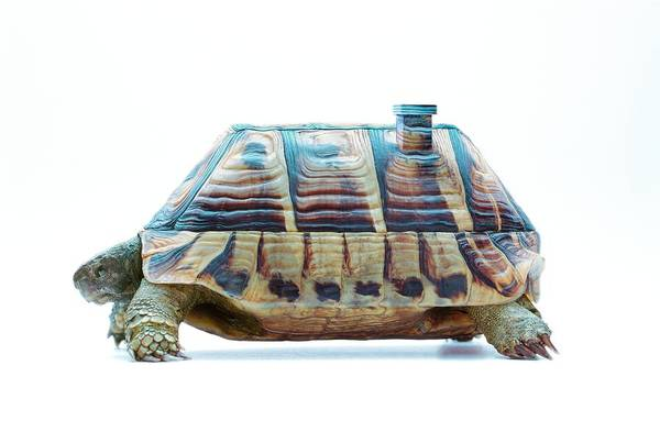 Tortoise Shell Photograph - Tortoise by Gustoimages/science Photo Library