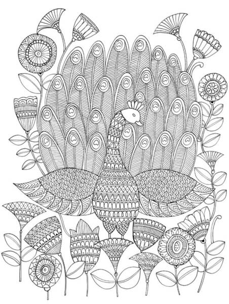 Peacock Drawing - Untitled by MGL Meiklejohn Graphics Licensing