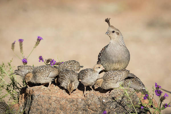Parent Photograph - Usa, Arizona, Amado by Jaynes Gallery