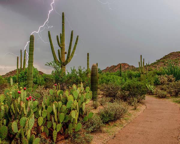 Ie Wall Art - Photograph - Usa, Arizona, Tucson, Saguaro National by Peter Hawkins