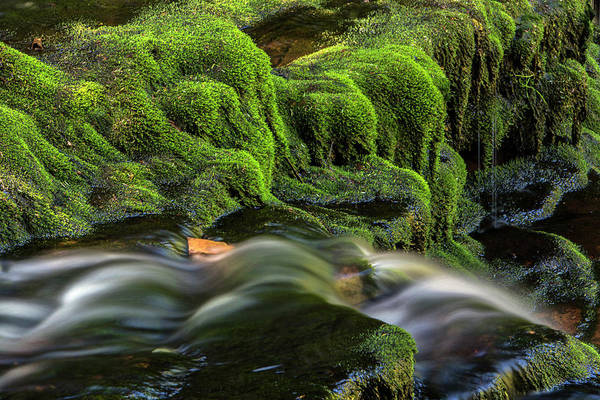 Green Jay Photograph - Usa, Pennsylvania, Benton, Ricketts by Jaynes Gallery