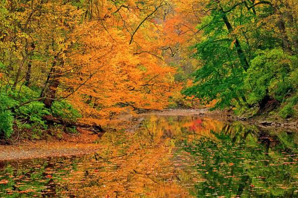 Green Jay Photograph - Usa, Pennsylvania, Dingmans Ferry by Jaynes Gallery