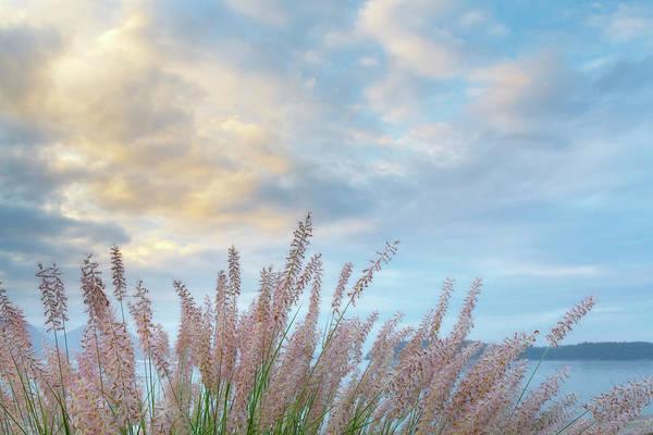 Pennisetum Photograph - Usa, Washington State, Seabeck by Jaynes Gallery