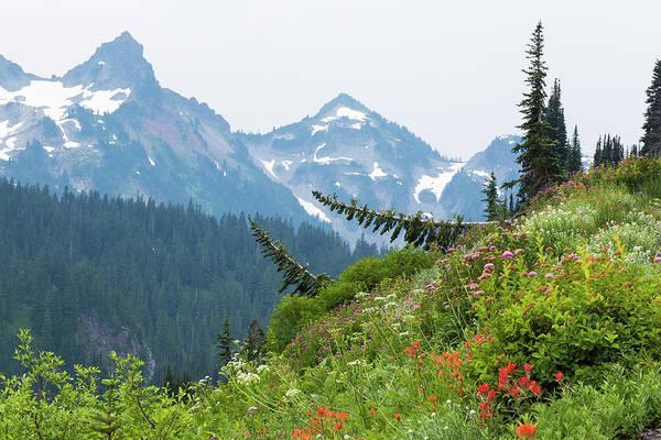 Alpine Meadows Photograph - Washington, Mount Rainier National Park by Jaynes Gallery