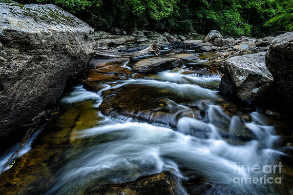 Trout Stream Photograph - Williams River Summer by Thomas R Fletcher