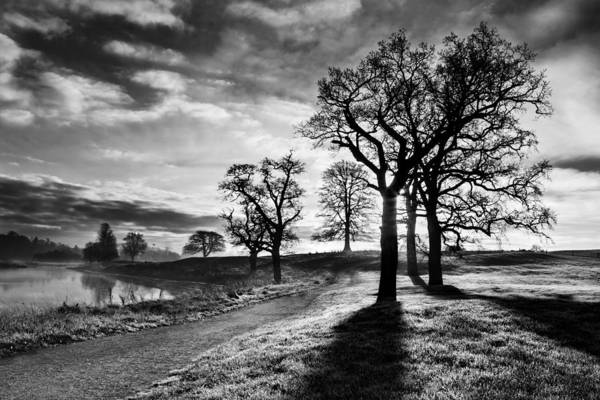 Photograph - Winter Morning Shadows / Maynooth by Barry O Carroll
