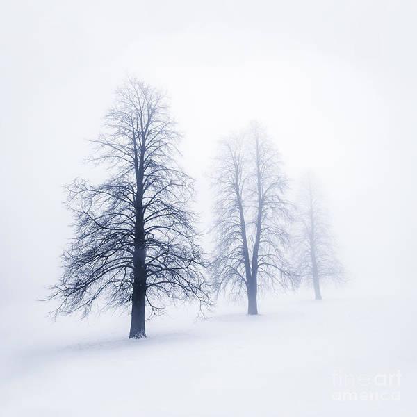 Three Trees Photograph - Winter Trees In Fog by Elena Elisseeva