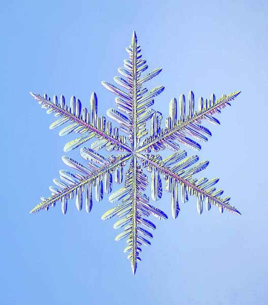 Snow Flake Photograph - Snowflake by Kenneth Libbrecht/science Photo Library