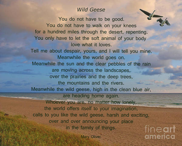 Digital Photograph - 40- Wild Geese Mary Oliver by Joseph Keane