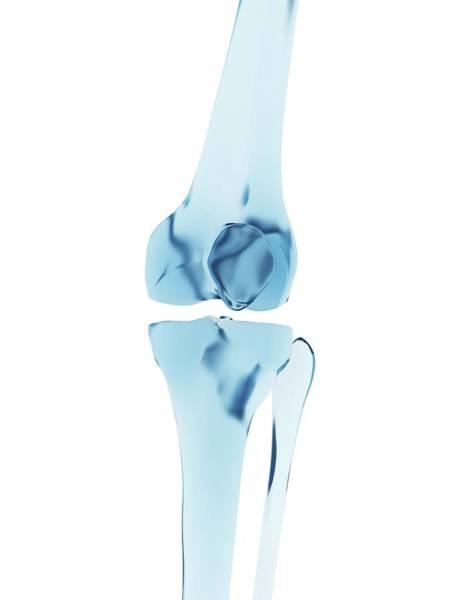Skeletal System Photograph - Human Knee Joint by Sebastian Kaulitzki