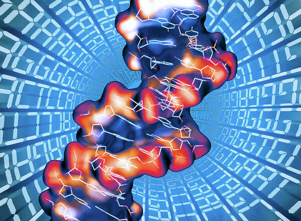 Genetic Code Photograph - Dna Molecule by Alfred Pasieka/science Photo Library