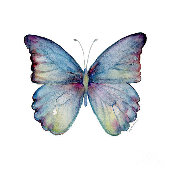 Wall Art - Painting - 43 Blue Celestina Butterfly by Amy Kirkpatrick