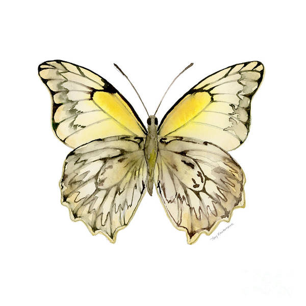 Painting - 44 Hesperocharia Graphite Butterfly by Amy Kirkpatrick