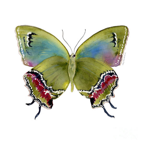 Painting - 46 Evenus Teresina Butterfly by Amy Kirkpatrick