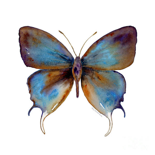 Painting - 48 Manto Hypoleuca Butterfly by Amy Kirkpatrick