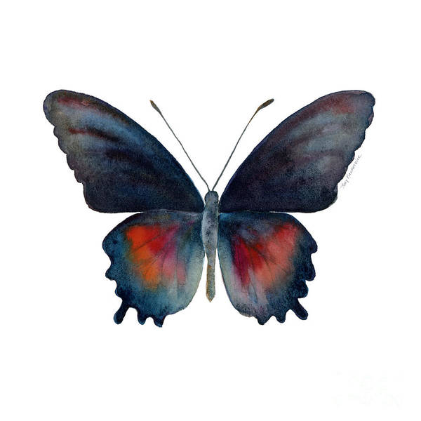 Painting - 49 Parides Orellana Butterfly by Amy Kirkpatrick