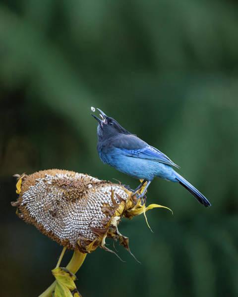 Corvidae Photograph - Usa, Washington State by Gary Luhm
