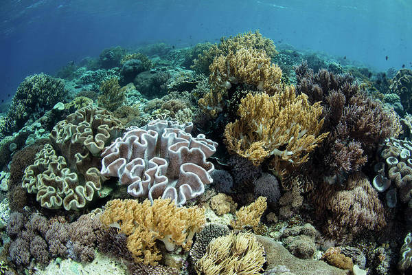 A Beautiful And Healthy Coral Reef Art Print