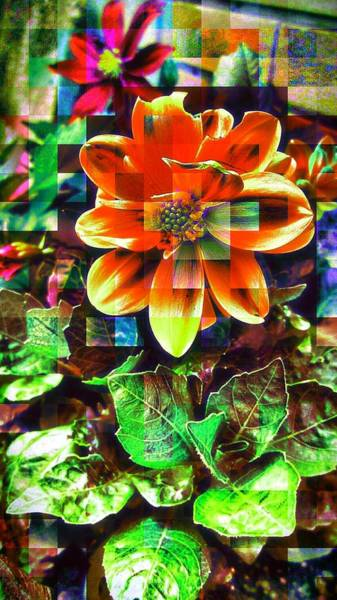 Edit Photograph - Abstract Flowers by Chris Drake