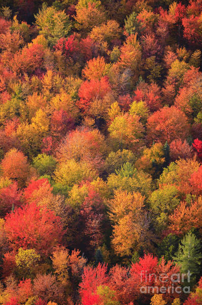 Wall Art - Photograph - Aerial View Of Fall Foliage In Vermont by Don Landwehrle