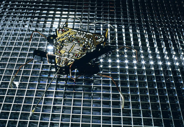 Wall Art - Photograph - Analogue Robot Insect by Peter Menzel/science Photo Library