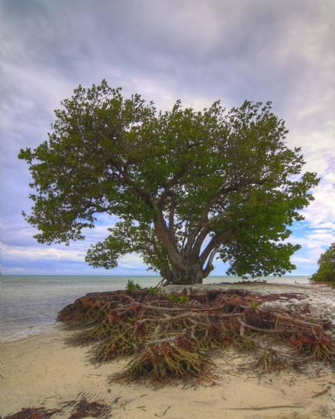 Photograph - Anne's Beach-1 by Rudy Umans