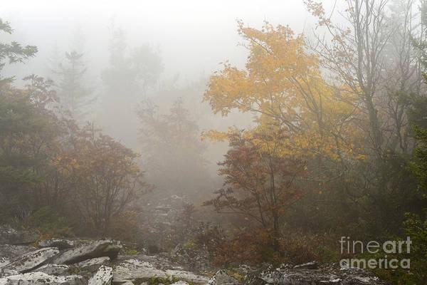 Photograph - Autumn Fog Dolly Sods by Thomas R Fletcher