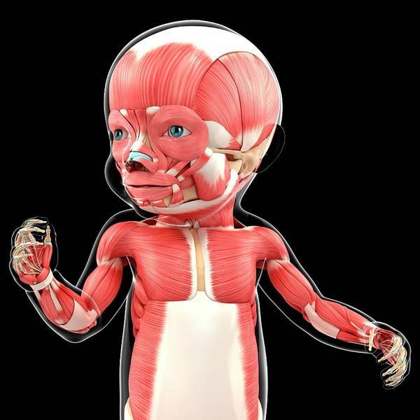 Oculus Wall Art - Photograph - Baby's Muscular System by Pixologicstudio