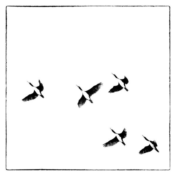 Photograph - 5 Birds by Stefan Nielsen