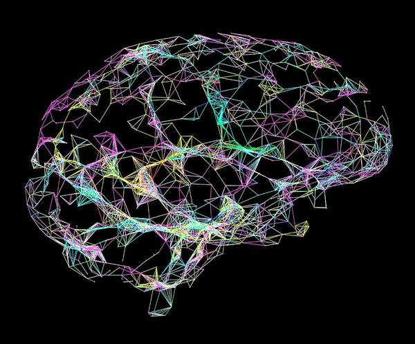 Neurobiology Photograph - Brain by Alfred Pasieka/science Photo Library