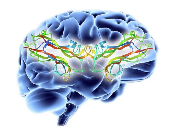 Brain-derived Neurotrophic Factor Art Print