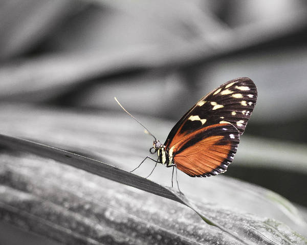Photograph - Butterfly by Nick Mares