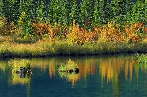 Vermillion Lakes Wall Art - Photograph - Canada, Alberta, Banff National Park by Jaynes Gallery