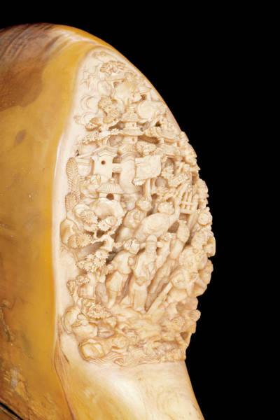 Hornbill Photograph - Carved Hornbill Skull by Natural History Museum, London
