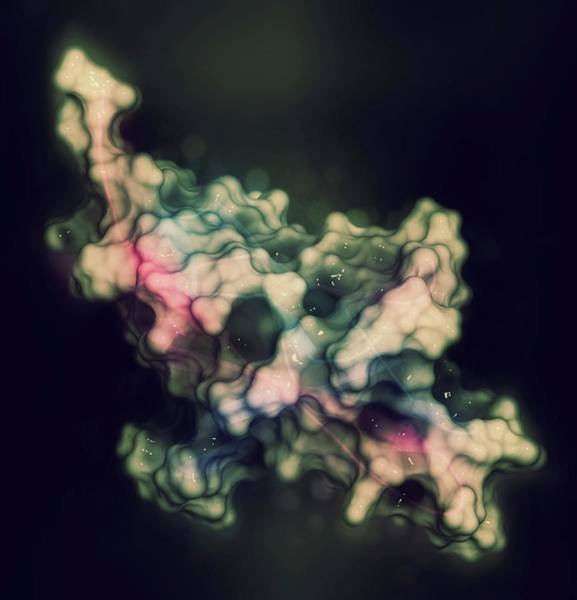 Wall Art - Photograph - Cell Death 1 Protein Molecule by Molekuul/science Photo Library