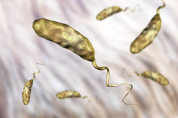 Wall Art - Photograph - Cholera Bacterium by Kateryna Kon/science Photo Library