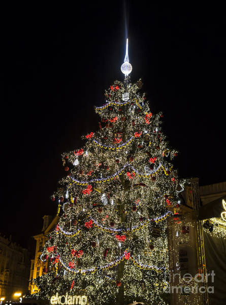 Wall Art - Photograph - Christmas Tree by IB Photography