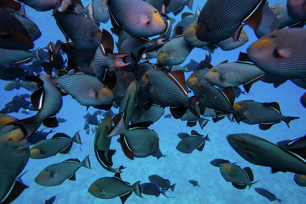 Wall Art - Photograph - Coral Reef Fish Swimming In The Pacific by Animal Images