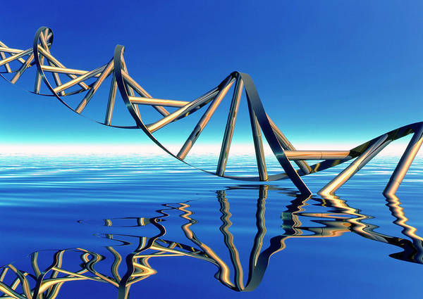 Double Helix Photograph - Dna by Alfred Pasieka/science Photo Library