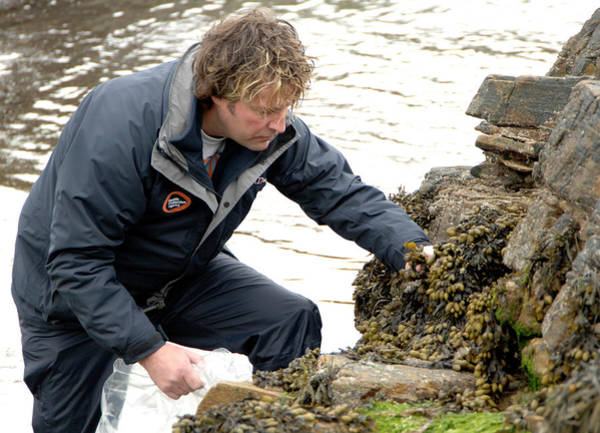 Seaweed Photograph - Environmental Monitoring by Public Health England