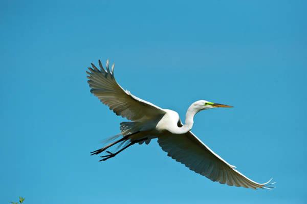 Ardea Photograph - Florida, Venice, Audubon Sanctuary by Bernard Friel